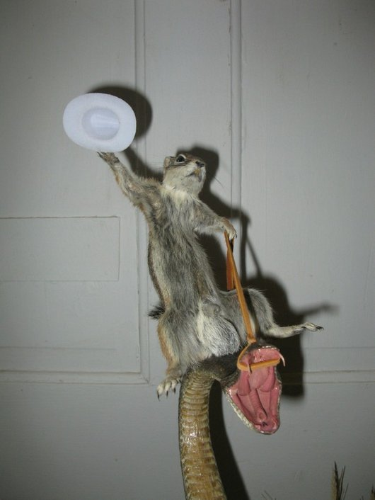 Squirrel Taxidermy Funny Riding Snake