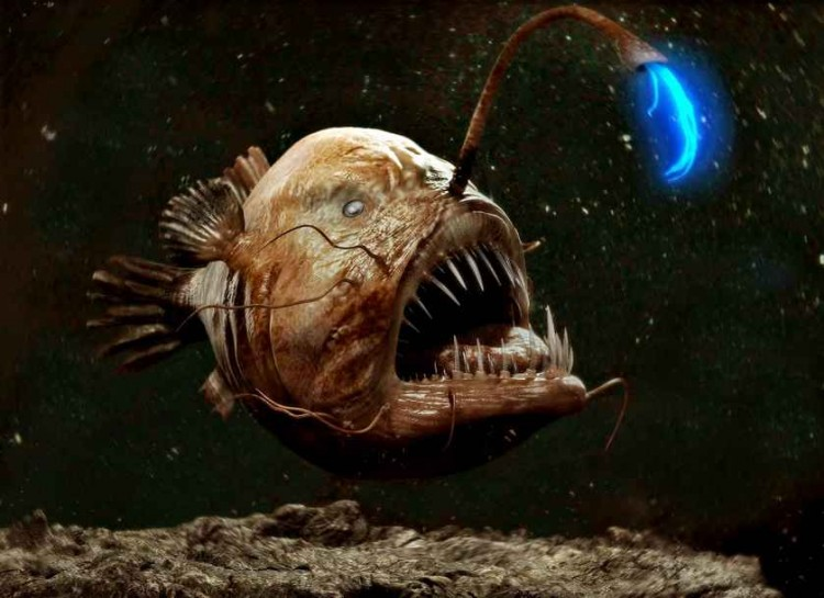 5 things i hate about heidi klum 39 s new house crabdiving for What do angler fish eat