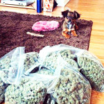 Dog fetches weed - Cannalinguists E057