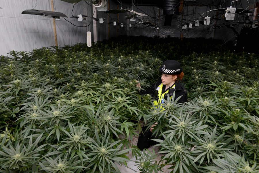 weed cop